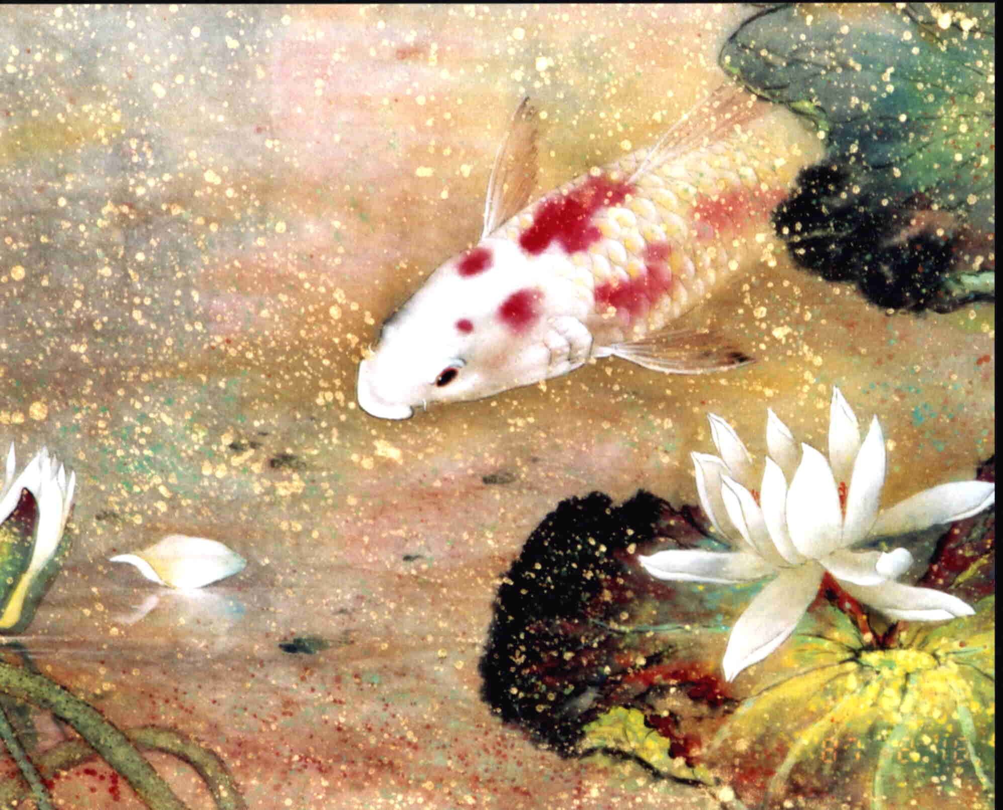 The fish quietly swimming in the lotus pond for Chinese koi pond